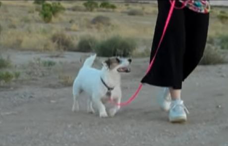 הכלב המתוק הזה יעזור לכם בניקיונות לקראת פסח!