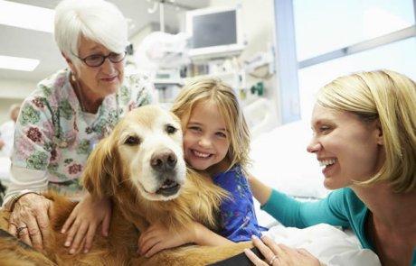 טיפול בעזרת בעלי חיים – מקצוע העתיד של רפואת הנפש