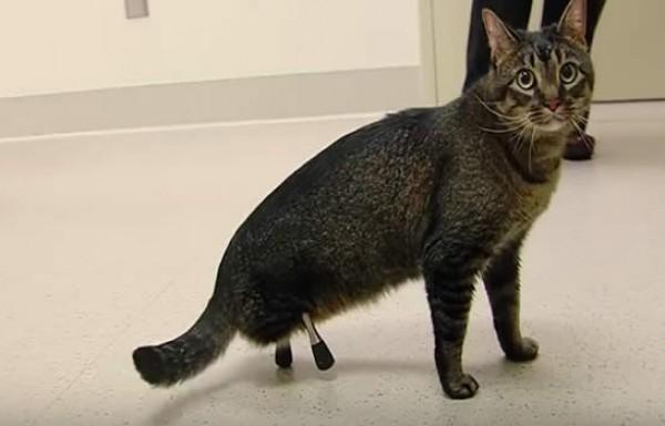 החתול הביוני.. לא להאמין מה טכנולוגיה יכולה לעשות