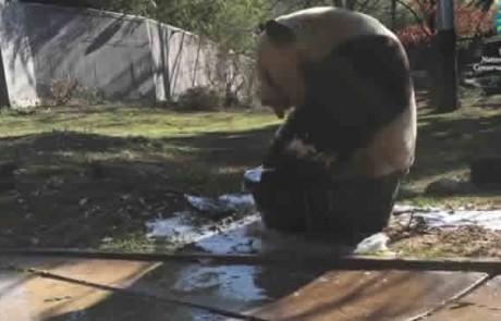 קבלו את מנת המתיקות היומית…טין טן עושה אמבטיה