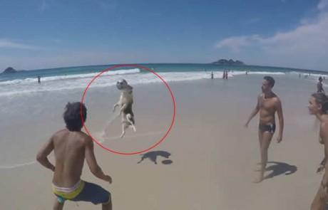 לשחק מסירות עם הכלב…