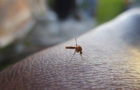 הרחקת יתושים: 8 פתרונות טבעיים וזמינים בכל בית לקיץ נטול יתושים!