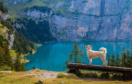 רוצים לבקר בנופיה המדהימים של שוויץ בלי לצאת מהבית? זה בשבילכם!